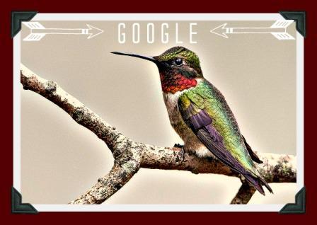 Hummingbird graphic01